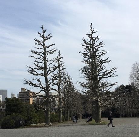 新宿御苑1-17.jpg