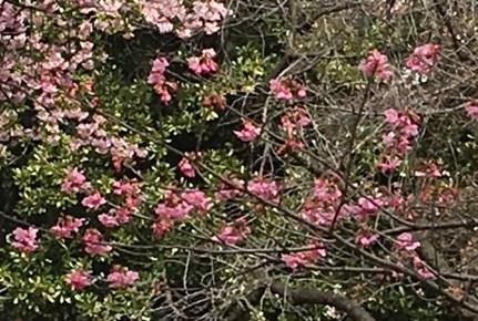 新宿御苑1-18.jpg