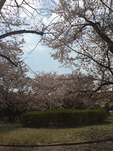 美浜公園0409-2.jpg
