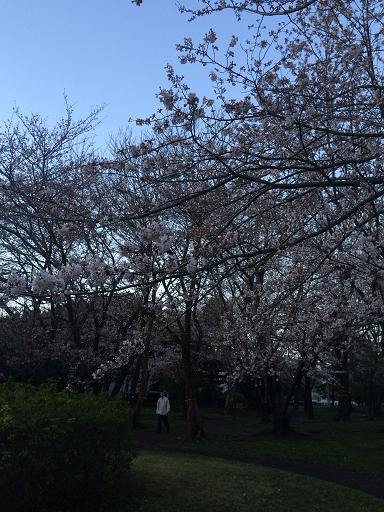 美浜公園1.JPG