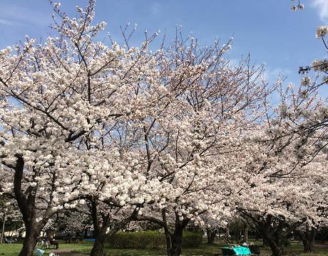 美浜公園4.JPG